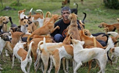 Nanda and sanctuary dogs