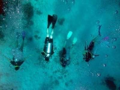 Scuba Diving Marine Biology Research